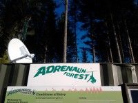 adrenaline-forest